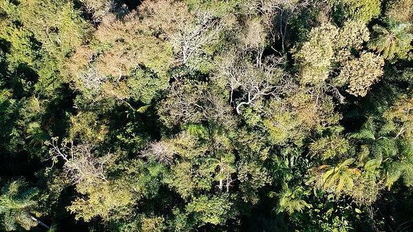 Misiones comienza a implementar el sistema de administración y control forestal de Ambiente Nación