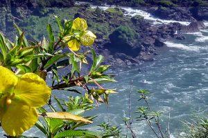 Se creó la reserva natural silvestre Alto Iguazú