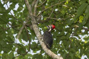 """La reserva Urugua-í recibió el título de """"área de importancia mundial para la conservación de aves"""""""