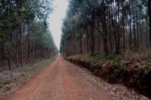 Proponen ley que limite plantaciones foresto industriales en zonas urbanas y cursos de agua