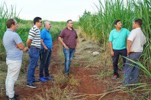 Buscan aumentar la producción de azúcar rubio
