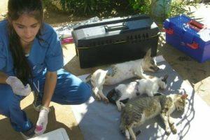 En el Imusa reciben hasta cuatro denuncias semanales por molestias de las mascotas
