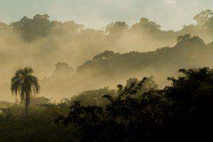 ¿Criptomonedas para ayudar a custodiar la biodiversidad misionera?