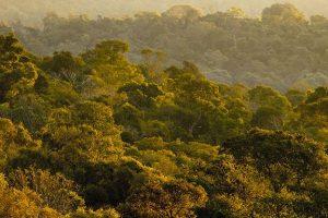 Misiones avanza por la senda de la conservación y el desarrollo sustentable