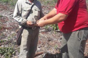 El RENATRE encontró 19 trabajadores rurales no registrados durante las fiscalizaciones de enero en Misiones