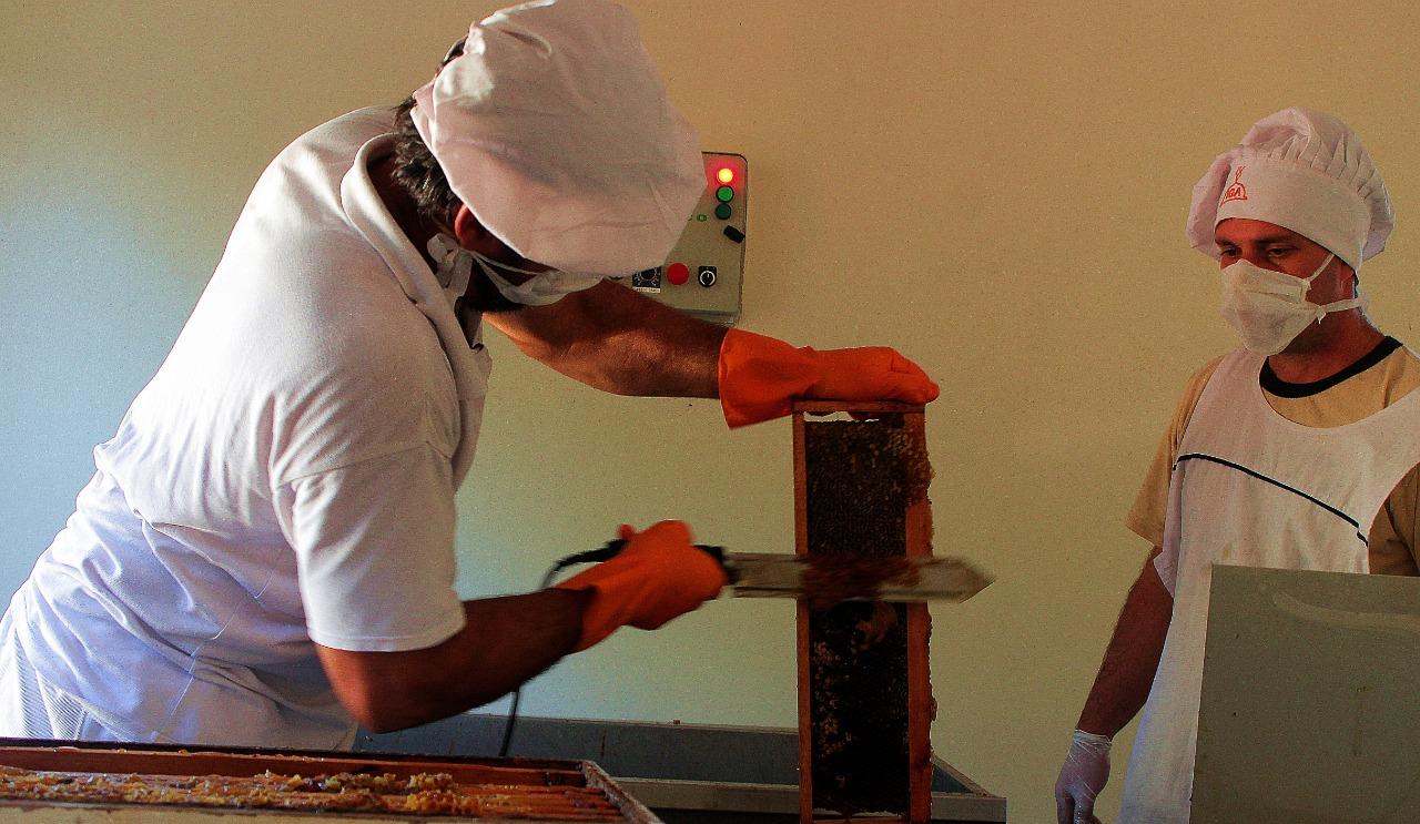 Productores apícolas de la provincia comenzaron la cosecha de miel