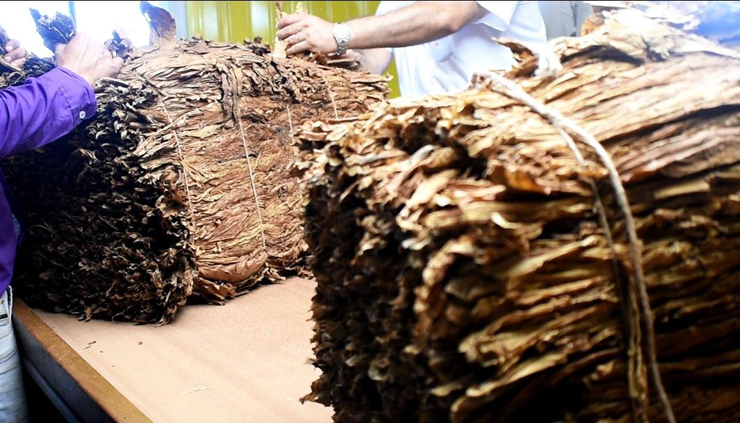 El tabaco inyectó más de 2.850 millones a la chacra misionera durante la cuarentena