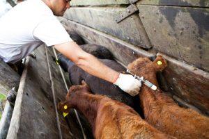 El Agro compró las dosis y junto al Senasa comenzaron a vacunar
