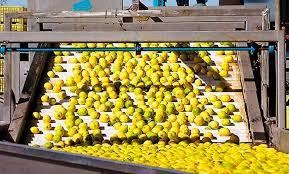 Reabren mercados: El jueves parte el primer embarque de limones a China