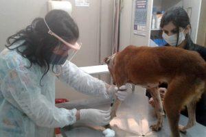 El IMuSA habilita turnos para adopciones y vacunación antirrábica
