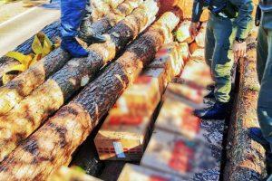 Decomisan 6.500 paquetes de cigarrillos extranjeros ocultos entre rollos de madera