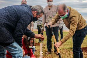 Nuevo pulmón verde: plantaron 50 árboles en la playa de Miguel Lanús