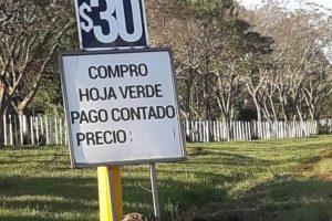 """Yerba imparable: la nueva normalidad, con valores """"garantizados"""" a 10 pesos encima del precio oficial"""