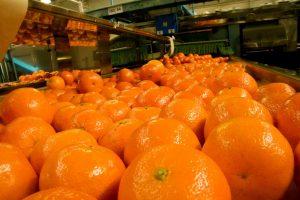 Bichos de campo, naranjas por el suelo y el salario del peón rural