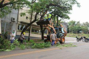 Se realizaron trabajos de poda en más de 200 barrios y Chacras