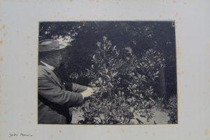 Carlos Thays, el francés que se convirtió en el jardinero de la Argentina y salvó de la extinción un cultivo esencial: la yerba mate