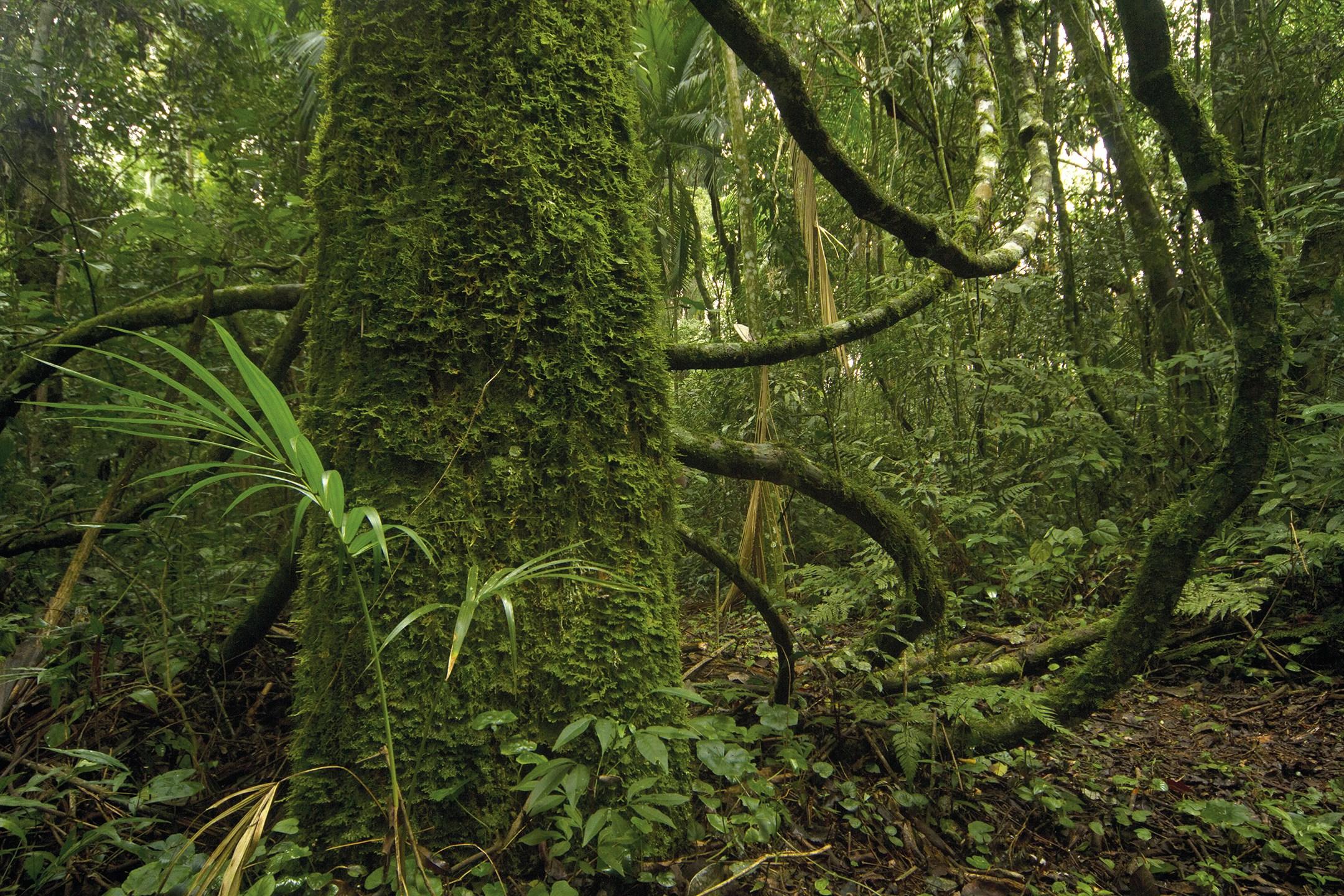 Economía verde: ¿Cuánto vale la selva misionera? ¿Cuánto resigna Misiones por la protección de bosques?