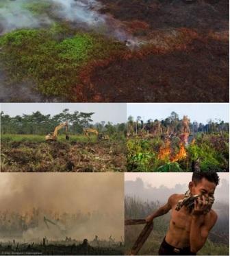 """Britto insta a que el """"Ecocidio"""" se incorpore a las legislaciones de países miembros del Mercosur"""