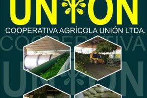 Oro verde: En Andresito ya pagan 35 pesos o 50 centavos de dólar, el viejo sueño de los productores yerbateros