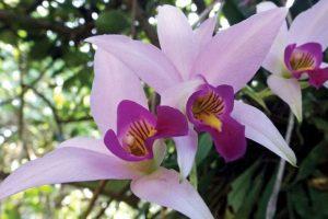 Misiones suspende la fiesta de la Orquídea y pasa para noviembre la del Inmigrante
