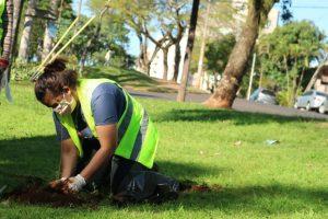 Prosiguen las tareas de arborización en espacios verdes de la ciudad
