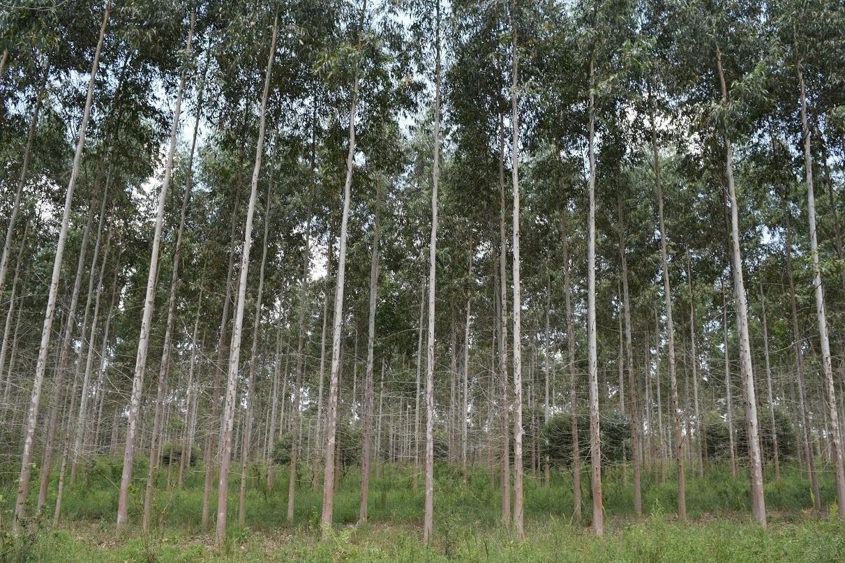 Agricultura transfiere más de 15,5 millones a Misiones por ley de Bosques Cultivados