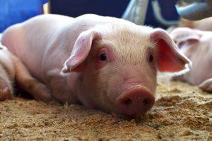 Cerdos y Diamantes: Lo interesante y lo discutible