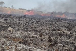"""Cabandié dijo que el 95% de los incendios forestales """"son intencionales"""""""