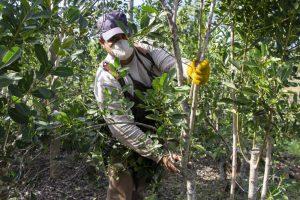 Ministerio de Trabajo de Nación tiene registrados a  4850 trabajadores rurales de Misiones para el programa Intercosecha