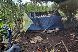 Yerba Mate: detectaron trabajo infantil en San Pedro y El Soberbio