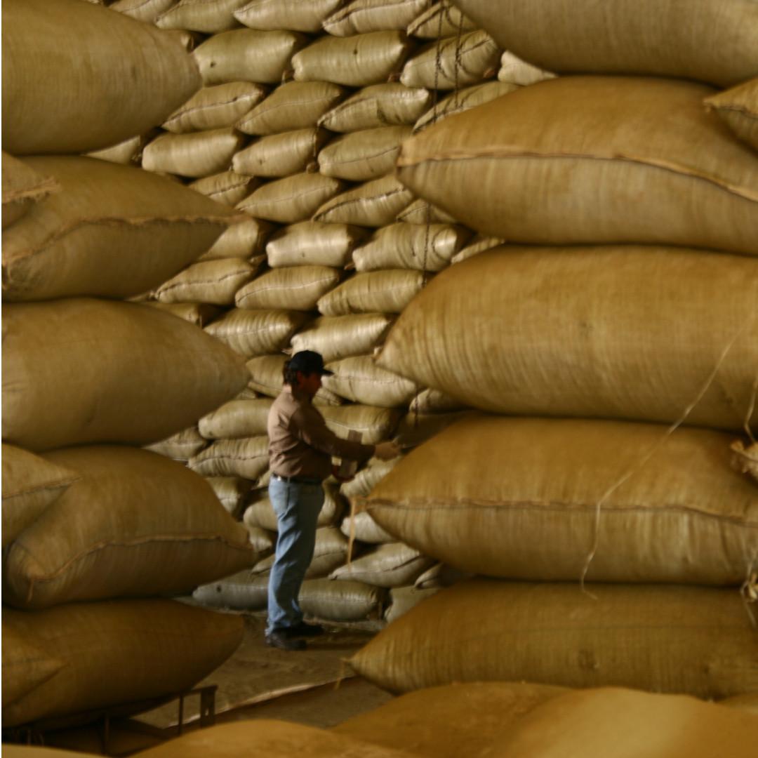 Primarización versus industrialización ¿qué exporta Misiones?