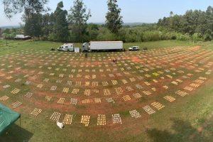 Secuestran más de 9 toneladas de marihuana en un camión que llevaba pollos en Misiones