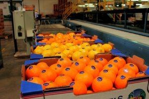 A través de una resolución fortalecen la competitividad de productores citrícolas