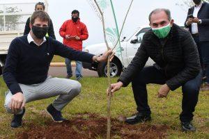 Plan Forestal Urbano: se plantaron 300 árboles en el Acceso Sur