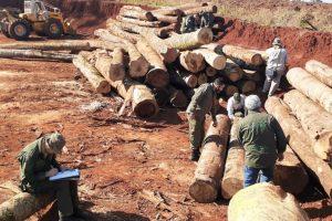 Inspectores Forestales realizan operativos de control en aserraderos de la zona norte