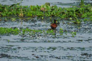 BioParque: Diversas actividades para la conservación de la Cuenca Zaimán