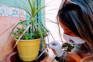 Dengue:  la campaña de sensibilización llegó a 91 mil hogares y se retiraron 294 toneladas de desechos