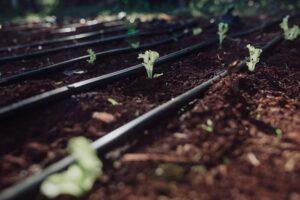 El IFAI entrego subsidio a Cooperativa agrícola en la inauguración de un sistema de riego a base de Energía Solar