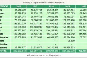 Yerba mate: caída en el consumo y menos cosecha