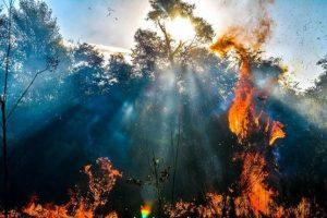 Los incendios forestales y rurales se producen principalmente por actitudes negligentes y desaprensivas