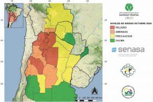 Elaboran un mapa de riesgo de aparición de la langosta sudamericana