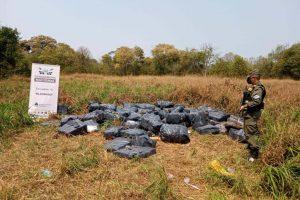 Hallan cerca de tres toneladas de marihuana acopiada entre la vegetación en Misiones