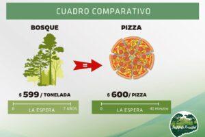 Comparaciones odiosas: una tonelada de pino en pie cuesta lo mismo que una pizza