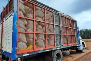 El INYM inutilizó otros 60 mil kilos de palos de yerba mate