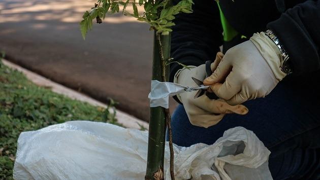Plantarán más de 700 árboles sobre la zona de construcción de la Travesía Urbana