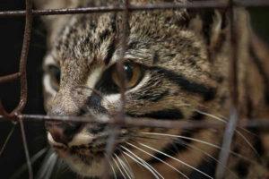 La BCA trasladó animales de un predio en Paraná que había sido fiscalizado en octubre