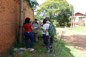 Nuevas capturas de caracol gigante africano en el Eldorado