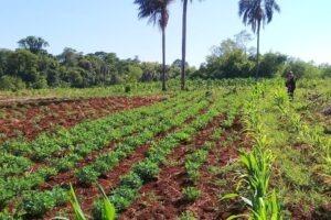 UTEP: Organizaciones campesinas y agrarias apoyan medidas para frenar el desabastecimiento de maíz