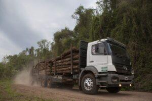 La foresto industria busca atraer inversiones por 6 mil millones de dólares