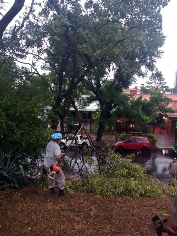 Posadas: equipos municipales trabajan en la recolección de árboles caídos